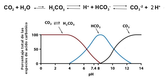 acidbase-equilibria-ph-and-buffers-17-638